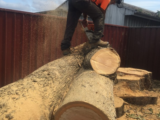 Cheap Arborist NSW tree removal